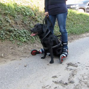 a woman wearing NordicX skates holding onto a black dog in harness