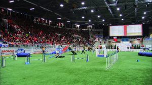 Indoor arena championship agility event set up on turf