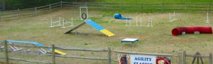 homemade agility course set in a paddock on natural grass