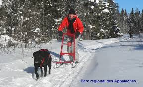Kicksledder being pulled by a black dog in harness
