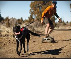Mountainboarder being pulled by a black dog in harness