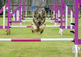 Medium sized mixed breed dog