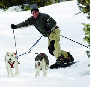 Snowboarder being pulled by two husky dogs in harness