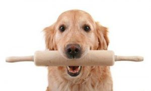 Golden Retriever holding a pastry rolling pin in his mouth