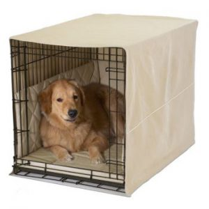 Golden Retriever relaxing in a covered wire crate, on padded bedding
