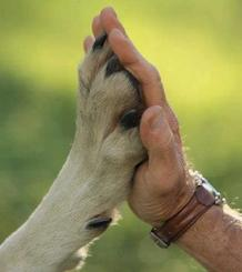 Large dog paw on a large man's hand in a high five