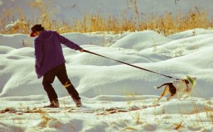 snow scene of a man pulling a dog in one direction while the dog tries to go in the opposite direction