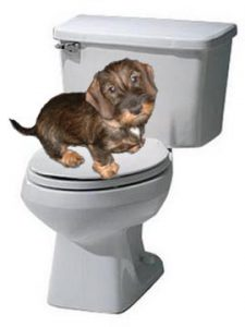 brown puppy sitting on top of a toilet with the lid closed