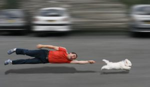 photo of a man in a red shirt and black pants being pulled horizontally by a white terrier