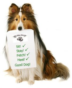 Rough Collie in a sit position holding a sign that says Sit,Stay,Fetch,Heel and Good Dog