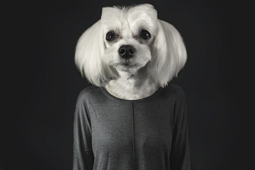 a dog is not a human