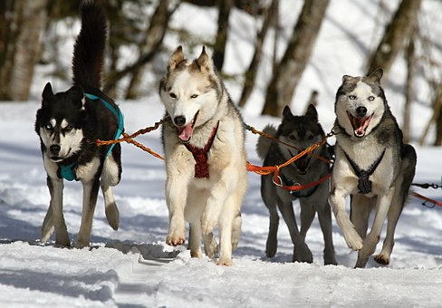 Dog training books & DVDs - Raising A Good Dog