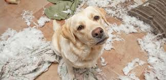 destructive dog behavior caused by anxiety and boredom