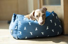 brown dog sleeping in a blue dog bed