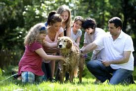 Golden Retriever surrounded by 6 people