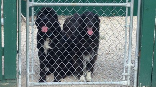 chain link kennel systems