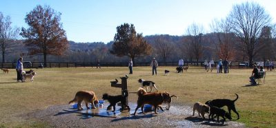 dogs and their owners enjoying a Fall day in a dog park