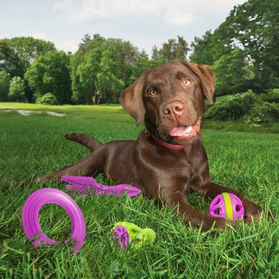 chocolate lab lying on grass with Kurgo toys