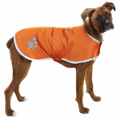 Tan coloured Boxer dog wearing a orange dog jacket