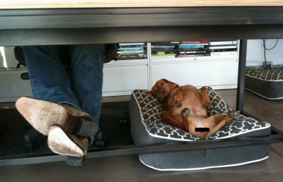 brown dog lying on his back on a dog bed under a desk