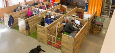 photo of Kurgo's dog friendly office