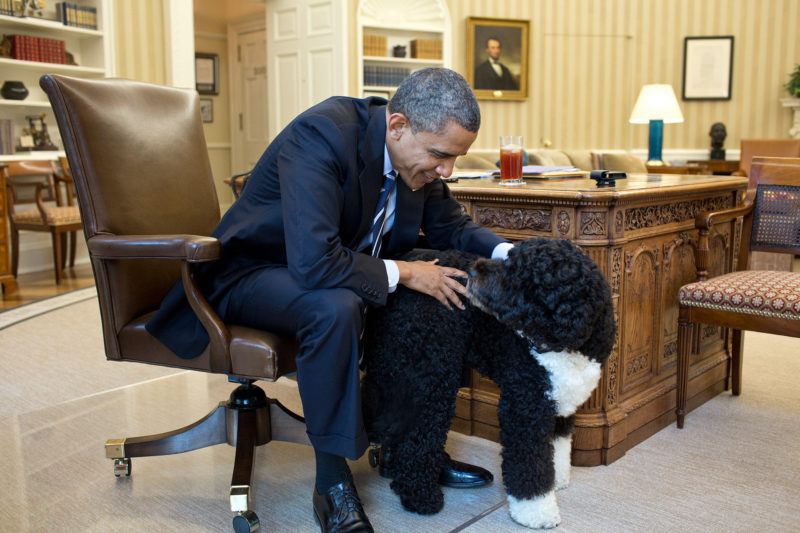 Former US President pets Bo, the family dog in the Oval Office