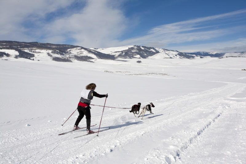skijoring with 2 dogs