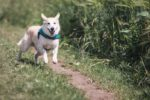 dog running on a path towards the photographer