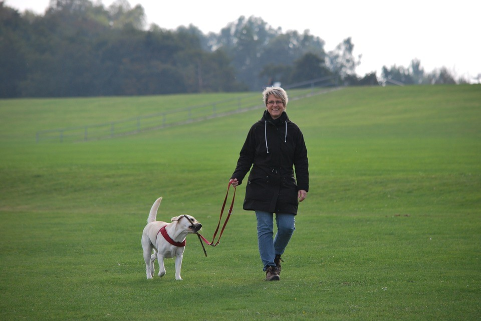 woman walking a yellow Labrador dog on a leash, and dog is carrying a stick in his mouth